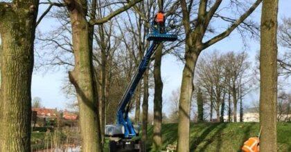 BBL Leerling Boomverzorger (ETW)  Wil je graag boomverzorger worden en heb je ...